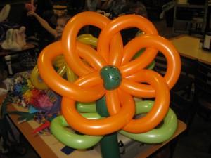 Large, multiple balloon flower